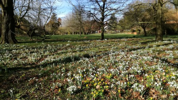 First snowdrop open day NOW CANCELLED Picture