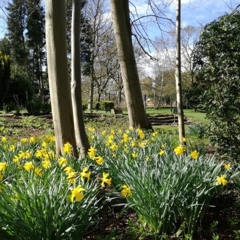 daffs March 2020